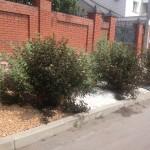Использование декоративных кустарников в дизайне придомовой территории (пузыреплодник дябл)