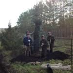 Заготовка крупномерных хвойных деревье в питомнике Башкортостана