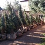 Эти же деревья уже в Оренбурге