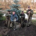 Пересадка крупномерных деревьев в г.Оренбурге из ул. Хабаровская в п. Ростоши (хотя и сложная ручная работа, но приживаемость 100%)