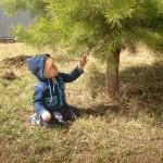 Любовь к бережному отношению к живому прививается с детства