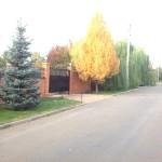 Пятно лиственницы сибирской выделяет фон остальных деревьев