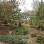 Хвойные и лиственные деревья при создании лесопарка в п. Пригородный, ул. Зеленая