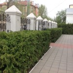 Стриженная живая изгородь из туи западной отражает стиль церковной ограды по ул. 8 марта (Католическая церковь)