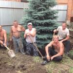 Пересадка деревьев ели голубой в августе. п. Ростоши. Высота деревьев 5-9 метров. Работа сложная, трудоемкая и дорогостоящая, но результат положительный.