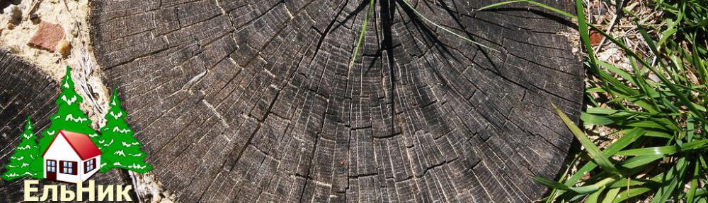 Ельник Оренбург | Ландшафтный дизайн, благоустройство и озеленение в Оренбурге, продажа саженцев и растений