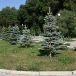 Озеленение ландшафта по ул. Хабаровской (ОренбурЭнергоСтрой)