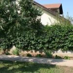 Вертикальное озеленение из винограда девичьего