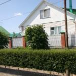 Живая изгородь из вяза мелколистного. п. Ростоши