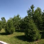 Освоение лесопарка, район Загородного шоссе