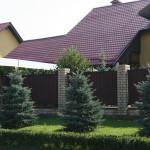 Живая изгородь из кизильники блестящего. п. Пригородный