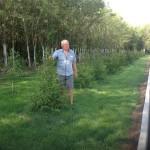 Озеленение детсада «КРОНА», весна 2017 года