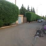 живая изгородь из вяза мелколистного (карагача) отлично защищает участок от шума пыли со стороны улицы, возраст 6-8 лет, но требуется постоянная стрижка для поддержания формы изгороди